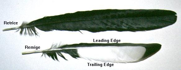 Bird Down Feathers Down Feathers The Next Most